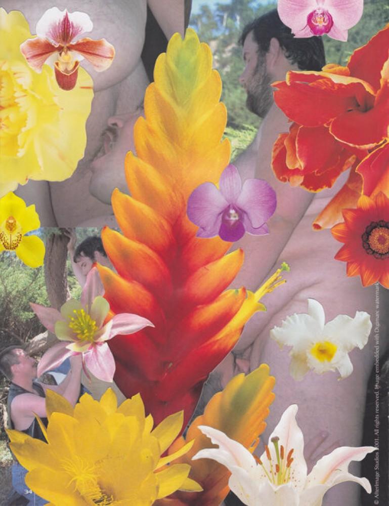 Bulk Male Flower Collage 21