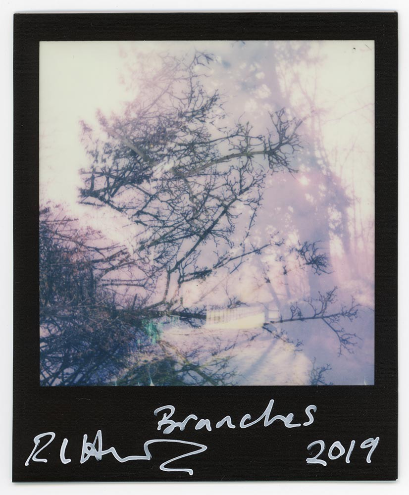 Branches, 2019