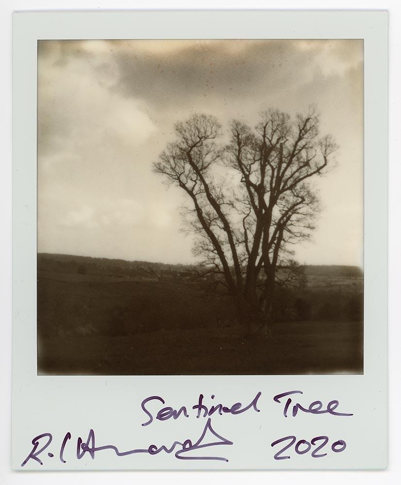 Sentinel Tree, 2020