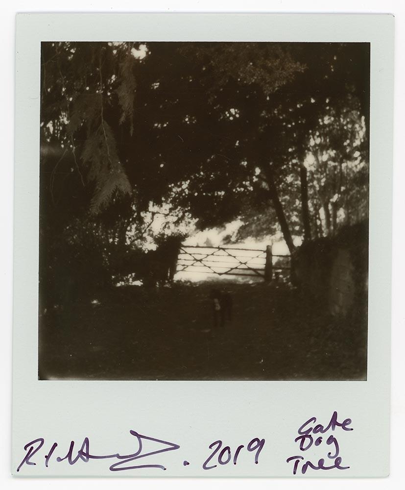 Gate Dog Tree, 2019