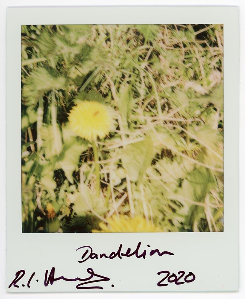 Dandelion, 2020