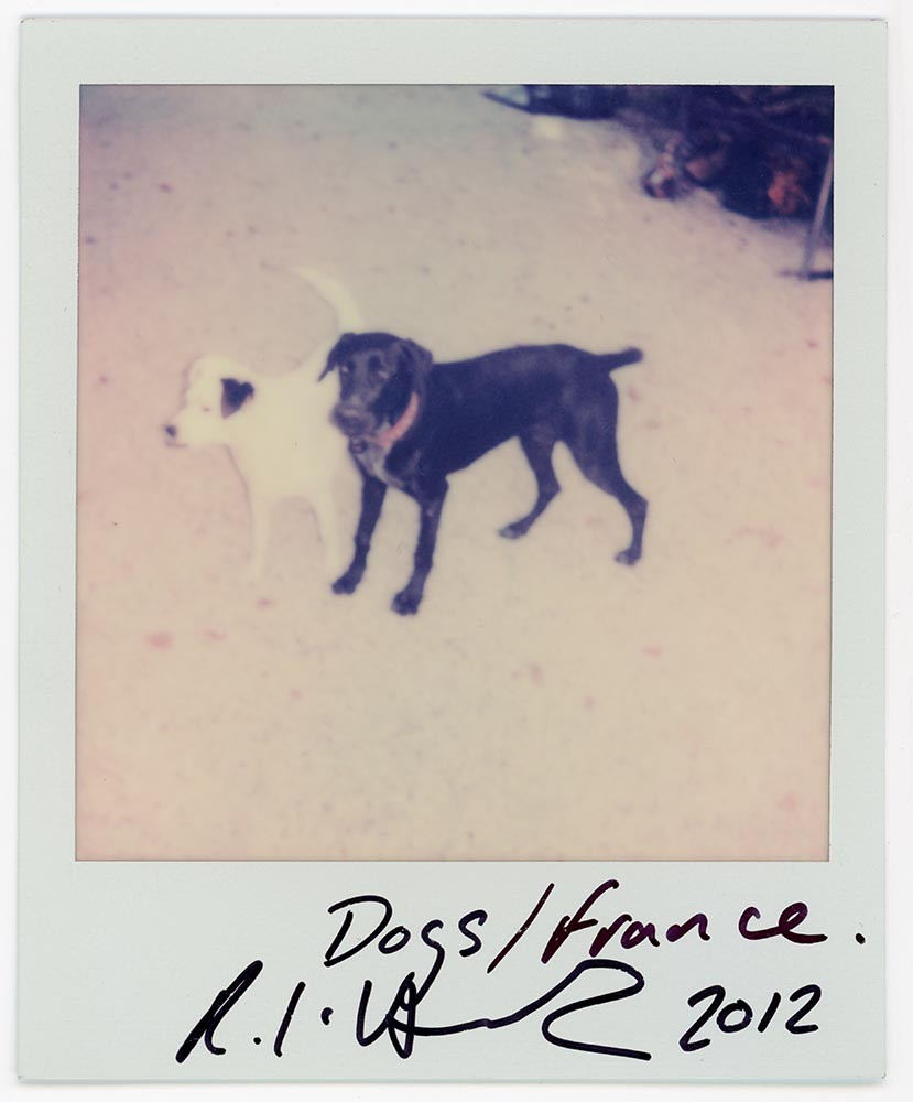 Dogs/France, 2012