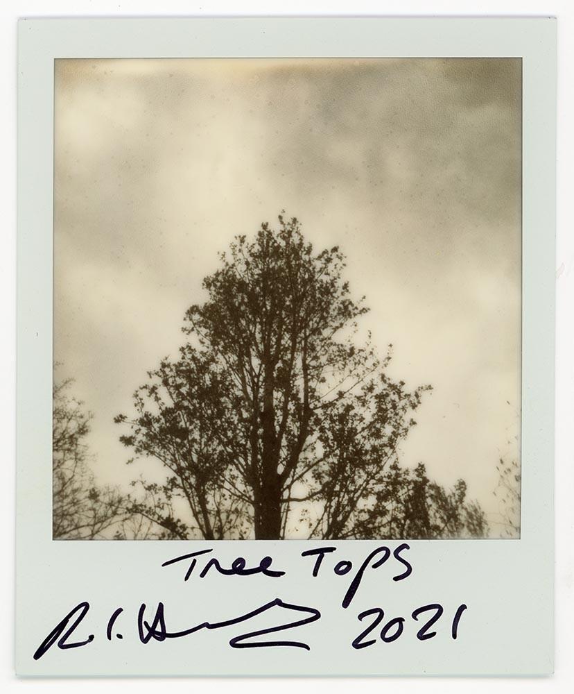 Tree Tops, 2021