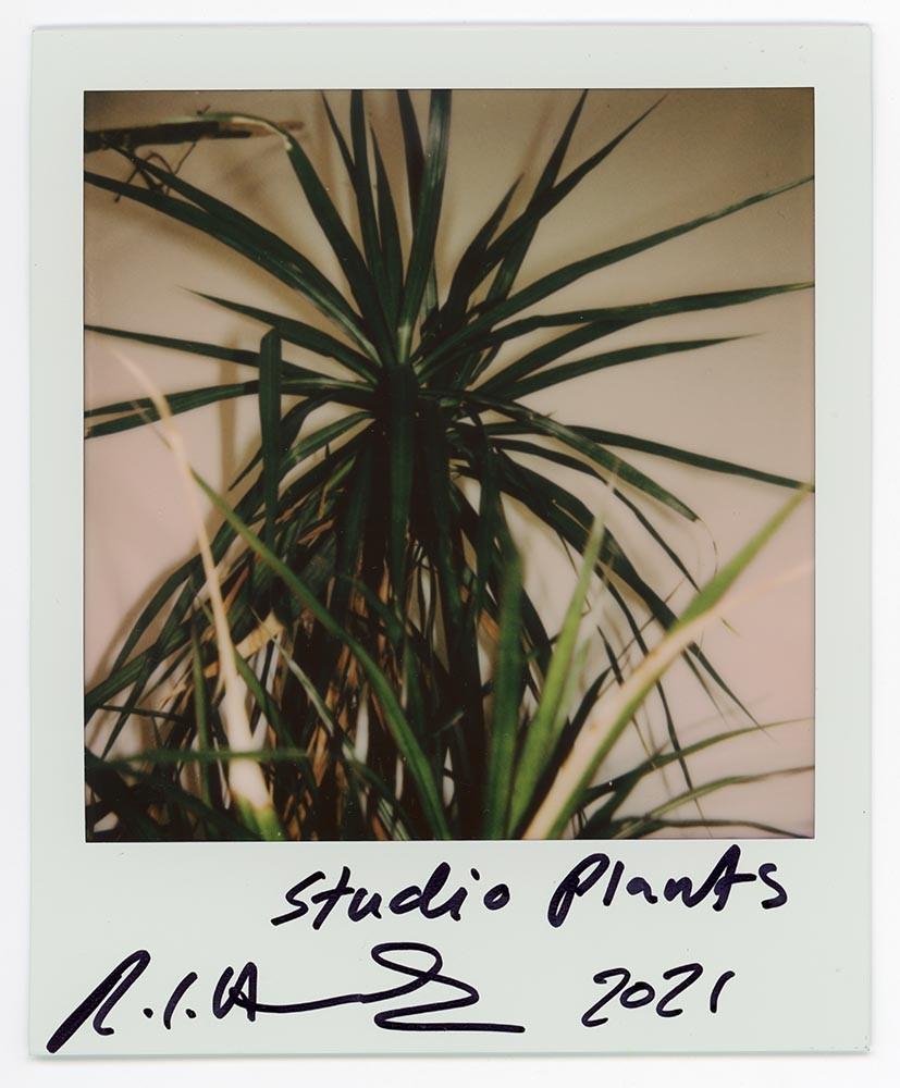 Studio Plants, 2021