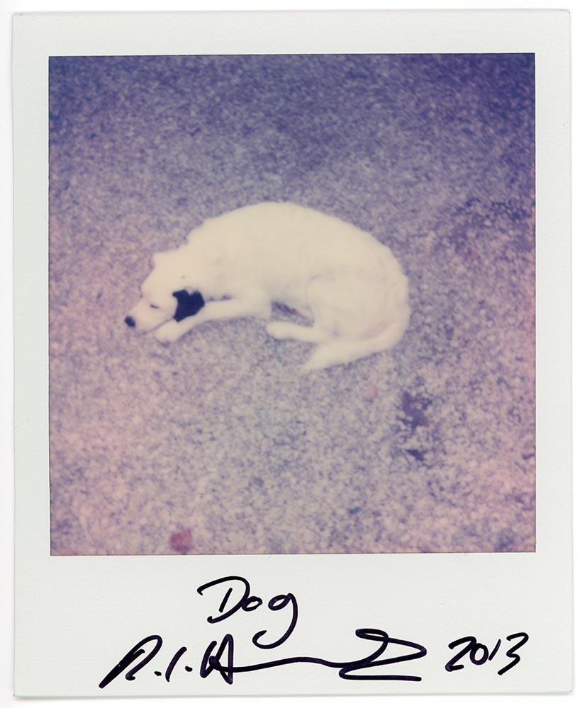 Dog, 2013