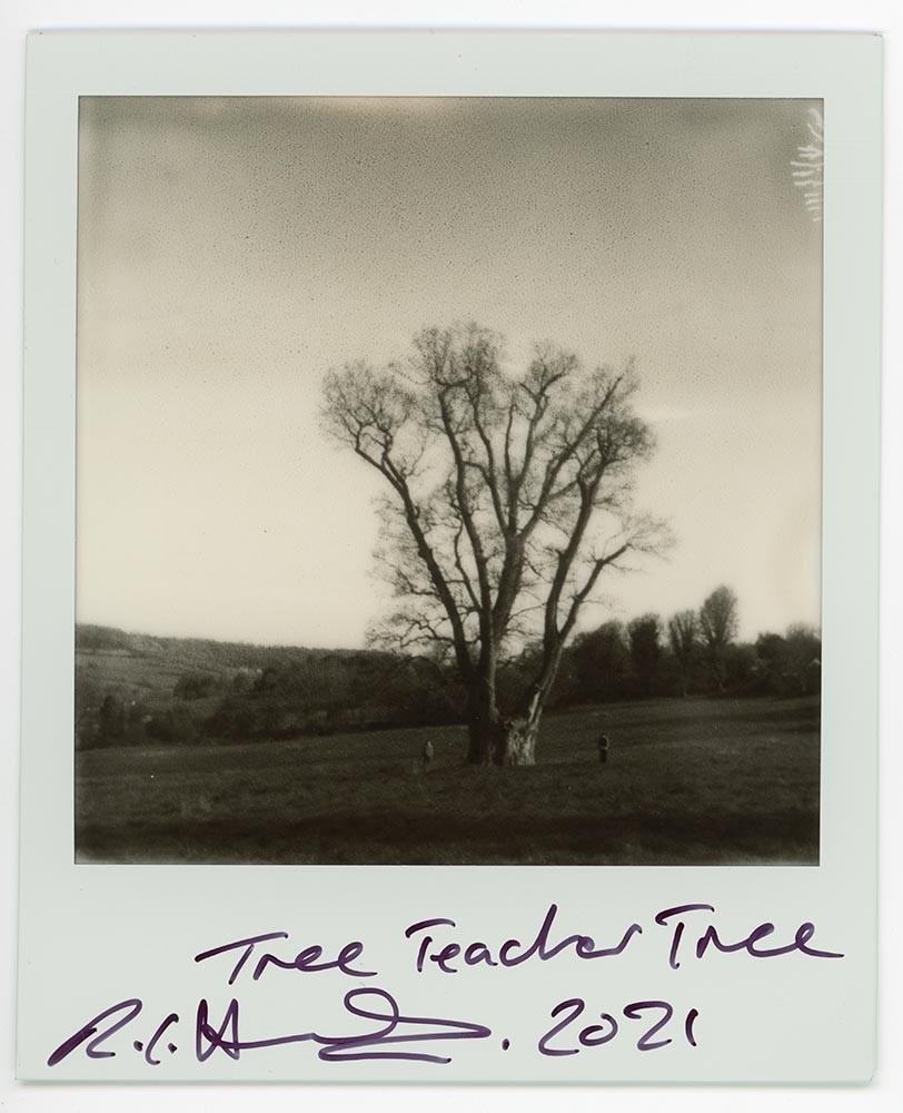 Tree Teacher Tree, 2021