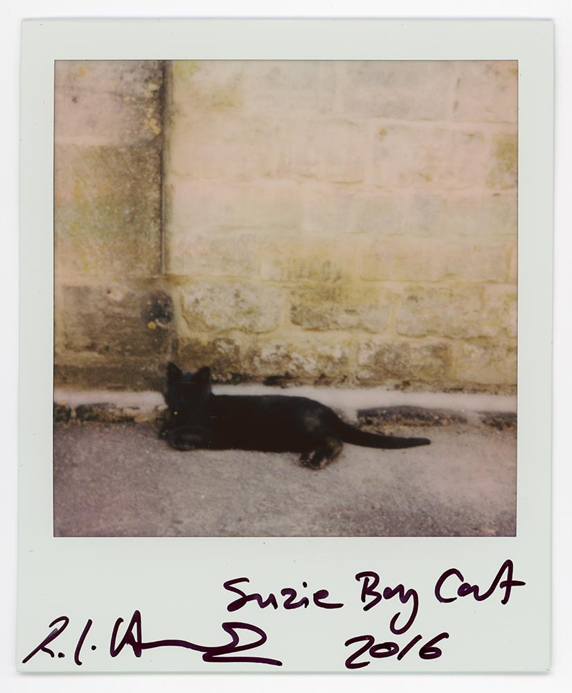 Suzie Boy Cat, 2016