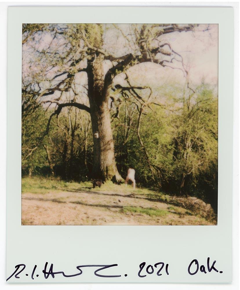 Oak, 2021