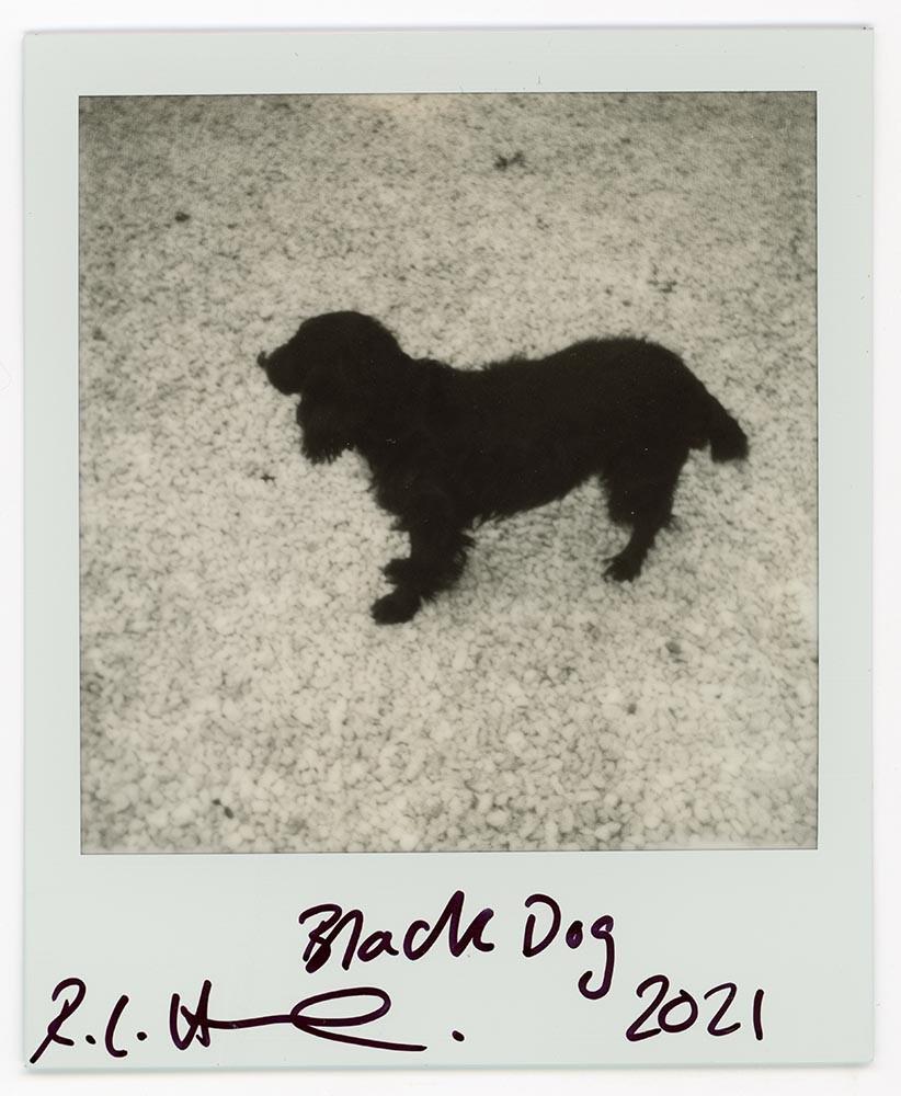 Black Dog, 2021