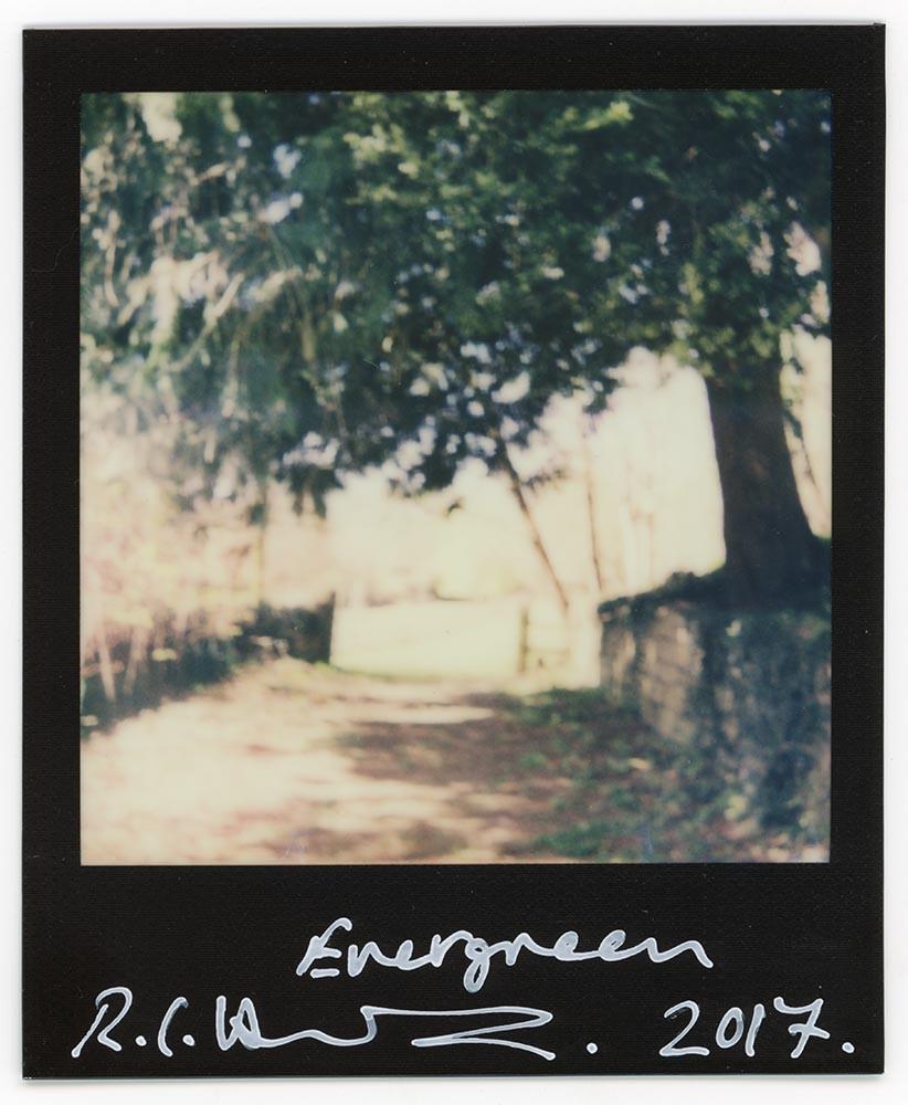 Evergreen, 2017