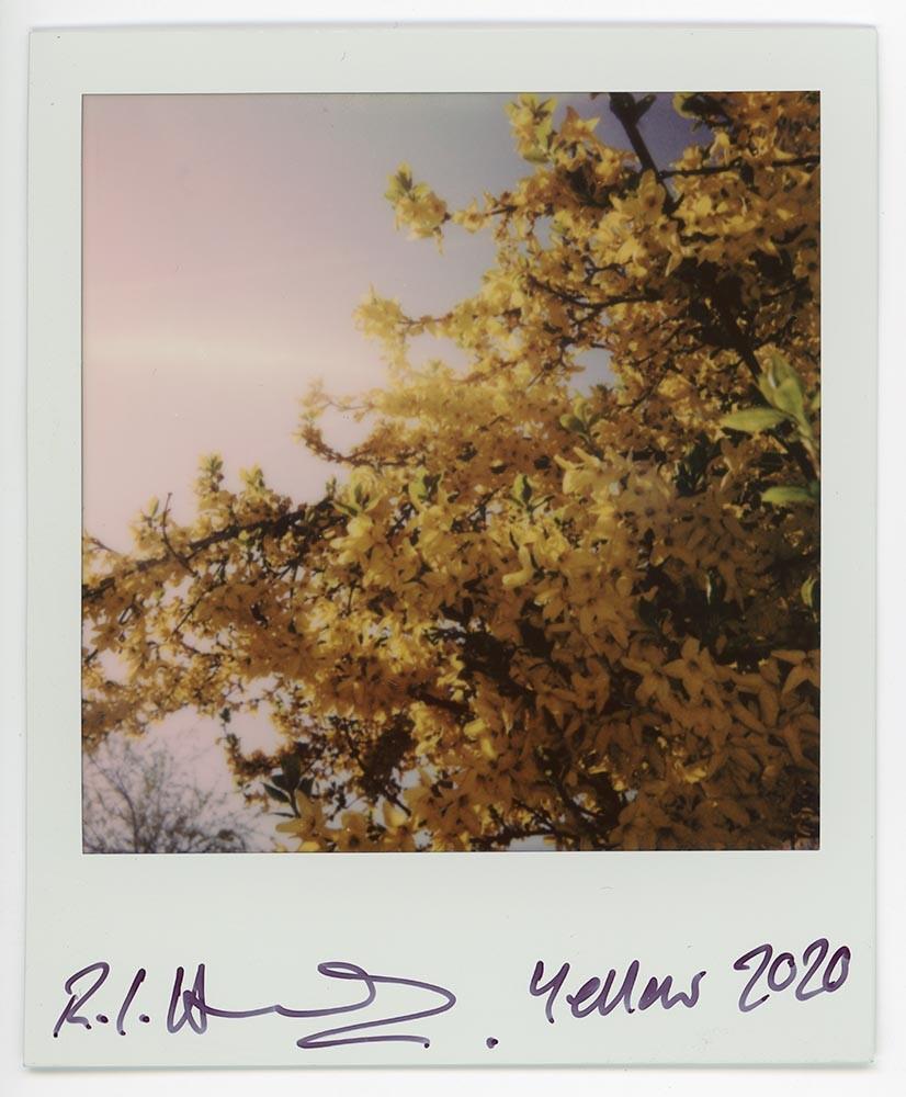 Yellow, 2020