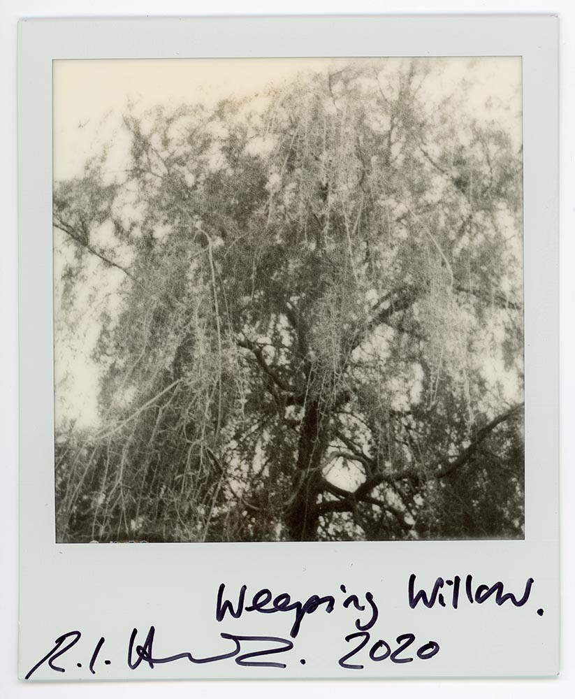 Weeping Willow, 2020