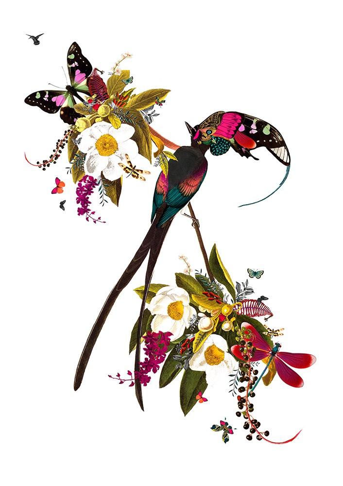 Langi Tagl Audubon - Art Print