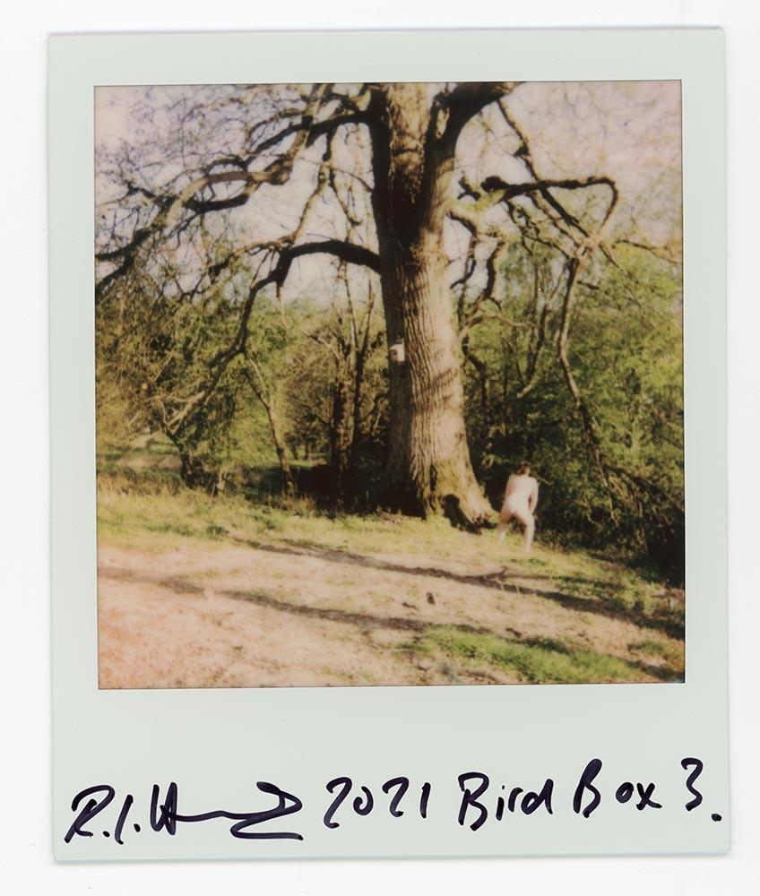 Bird Box 3, 2021