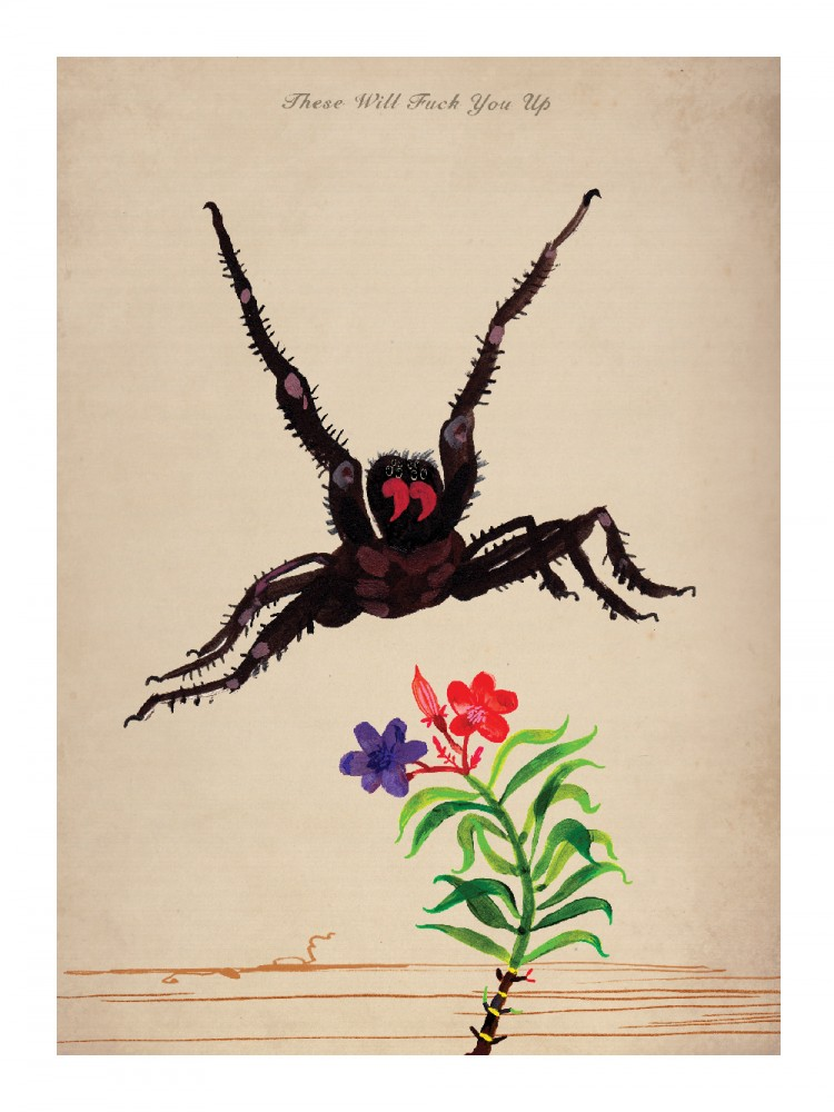 These Will Fuck You Up (Funnel Web Spider & Oleander) 40x30cm