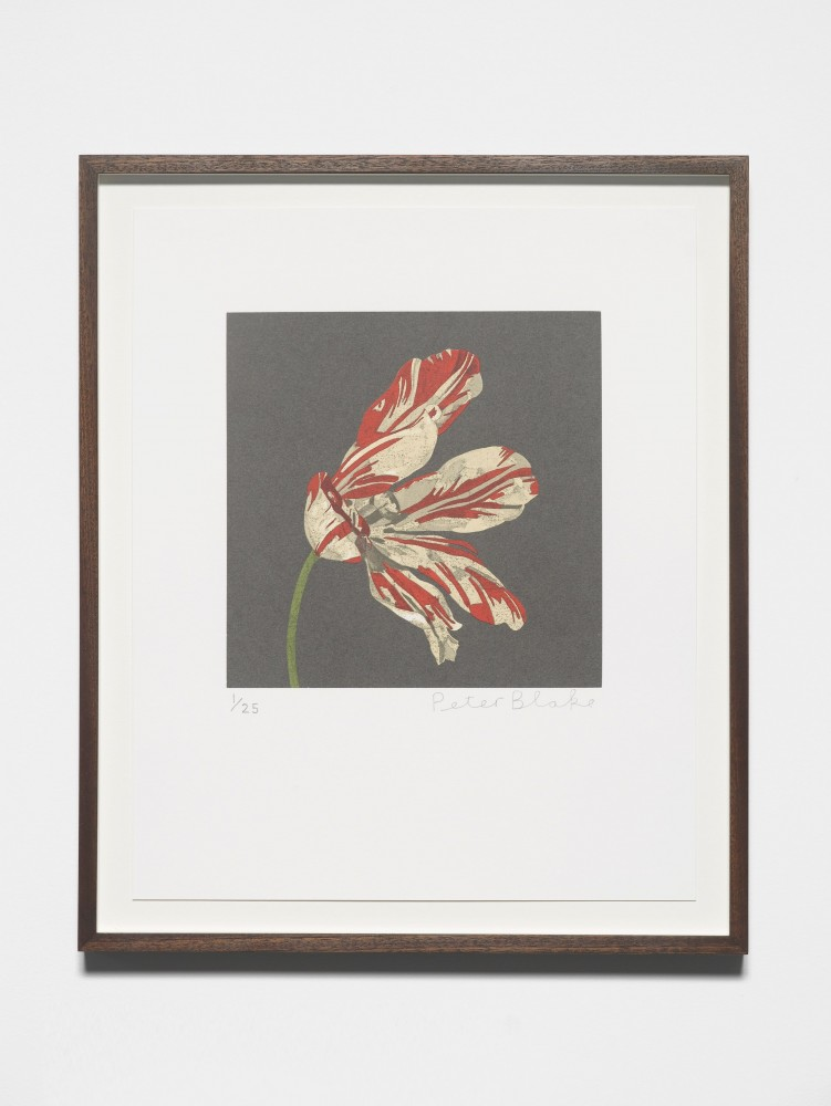 Tulip (after Walscapelle, Flowers in a Glass Vase) - Sir Peter Blake