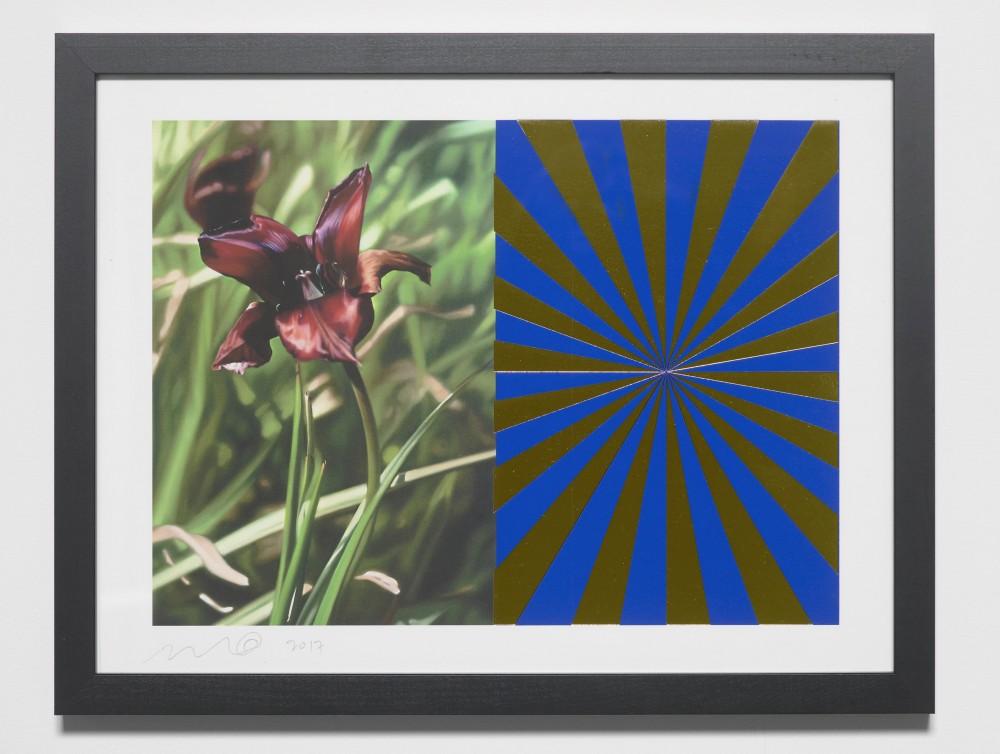 Cyprus Black Tulip 4 Blue Gold Expander - Mustafa Hulusi