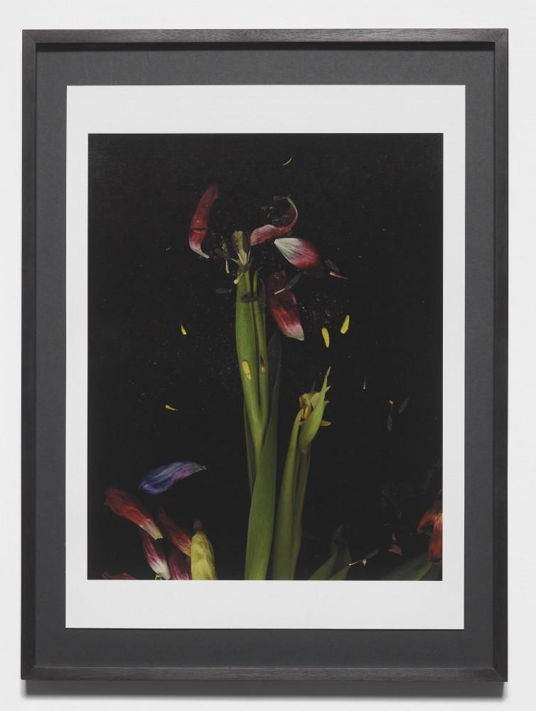 Tulipmania - Mat Collishaw