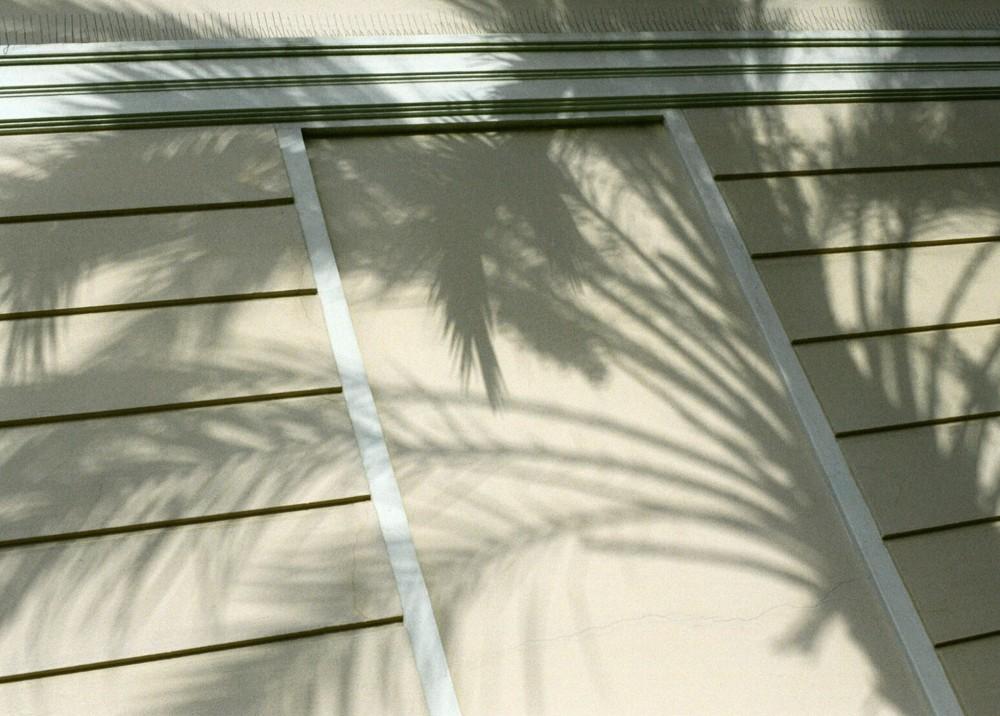 Monaco Palm
