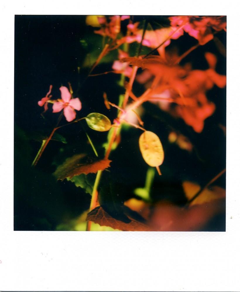 Honesty Polaroid 1
