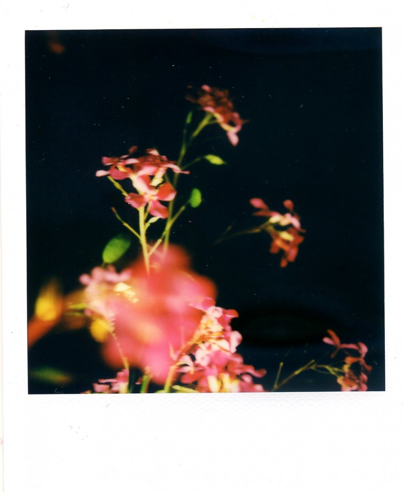 Honesty Polaroid 4