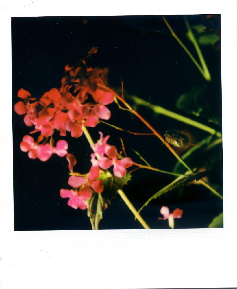 Honesty Polaroid 5