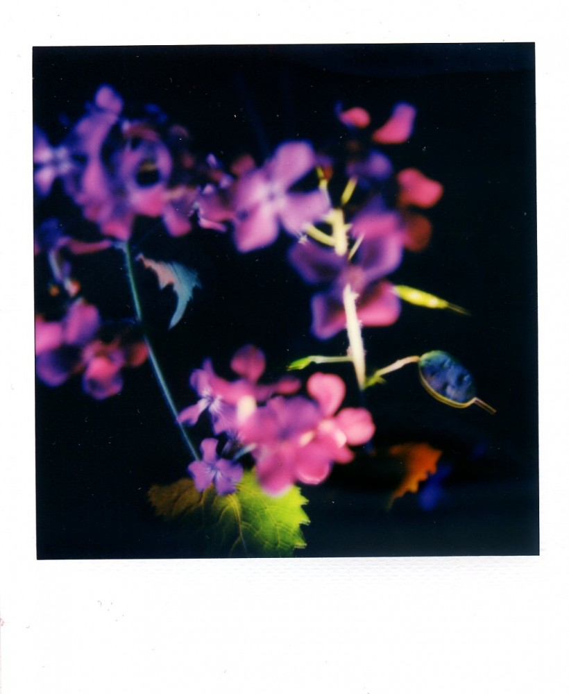 Honesty Polaroid 6