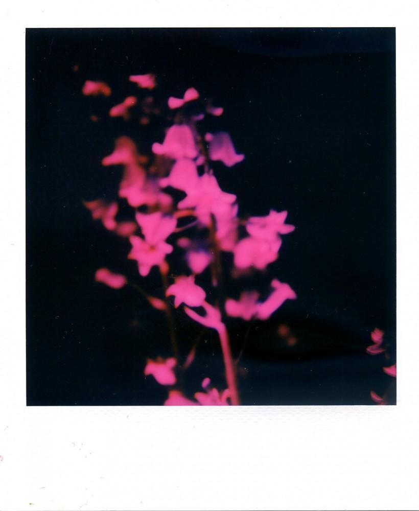 Bluebells Polaroid