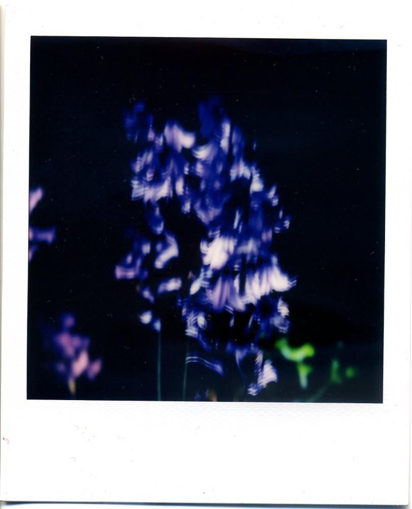 Bluebells Polaroid 6
