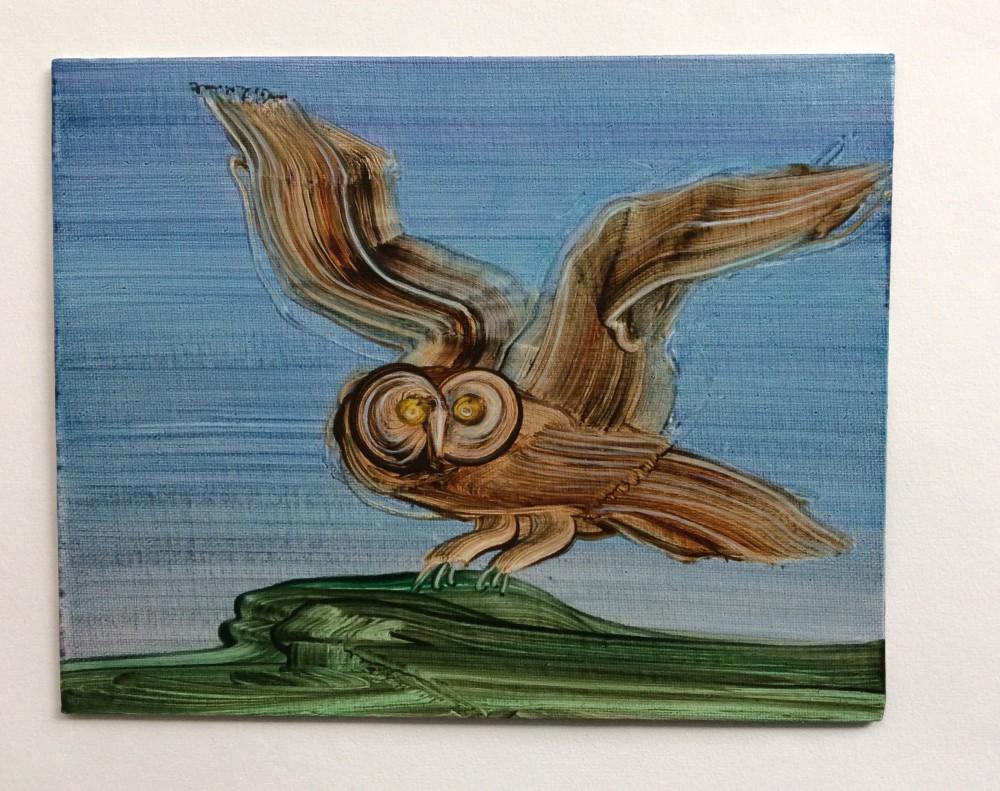 Startled Owl