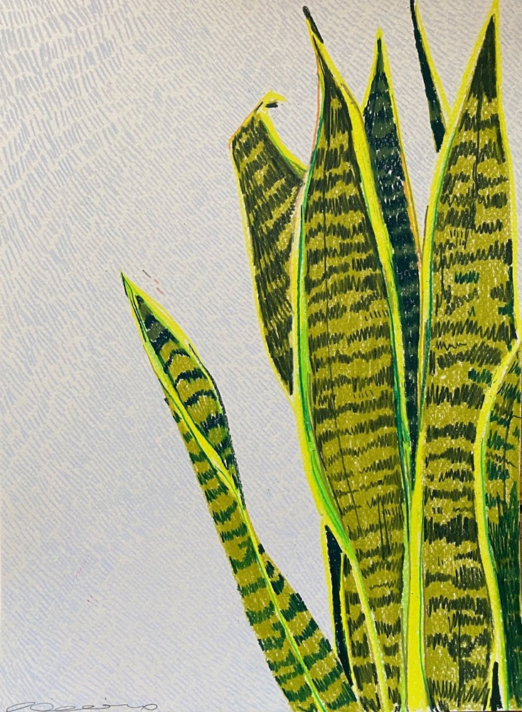 Small Snake Plant Study 1