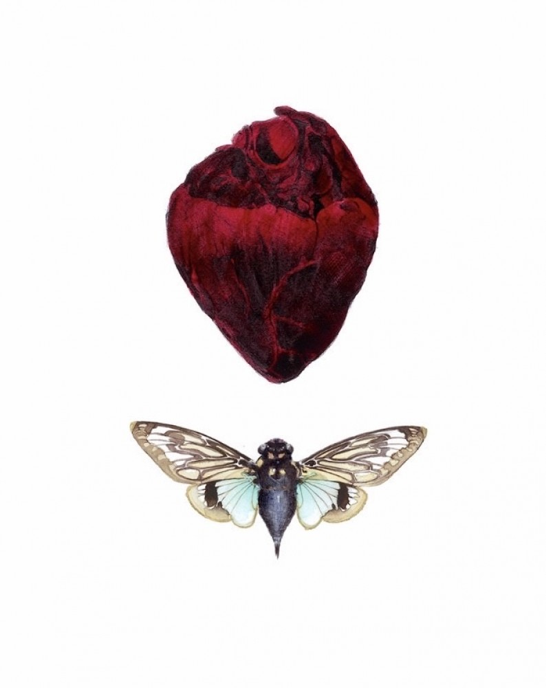 Ballad of Cicada
