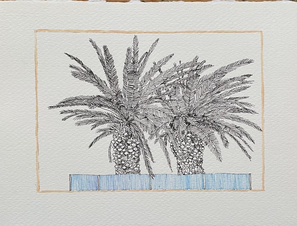Landscape Palm Study 2