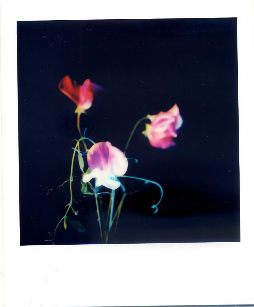 Polaroid July