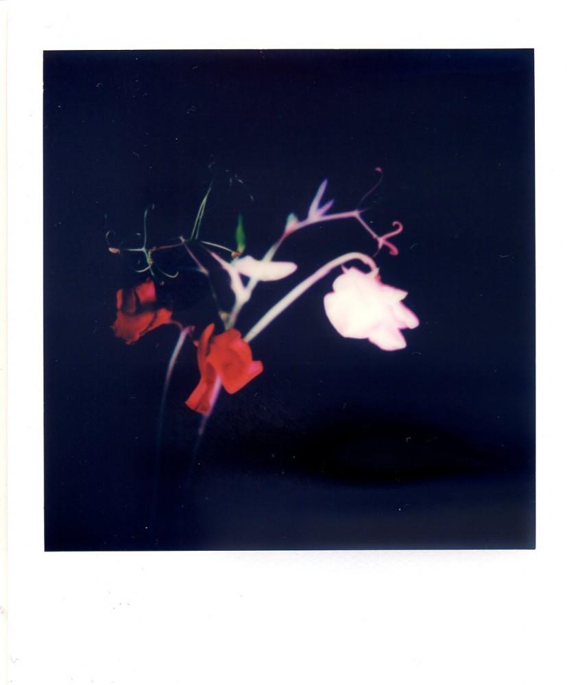Polaroid July 05