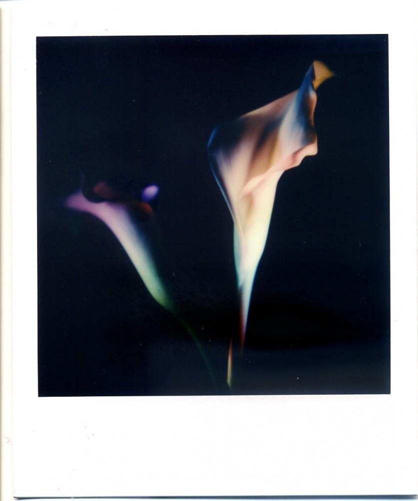 Polaroid Calla Lily