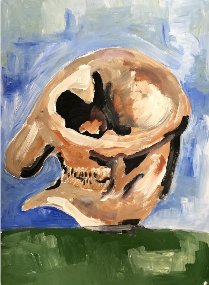 elephant skull-